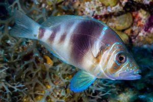 cozumel fish barret hamlet