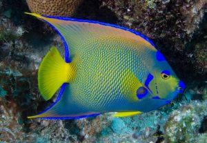 cozumel queen fish