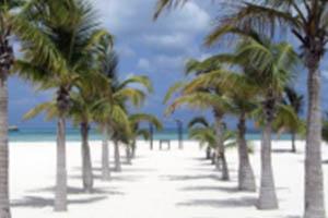 Passion island cozumel mexico